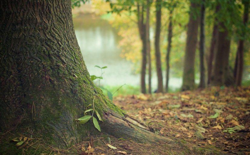 Prześliczny oraz {zadbany zieleniec to nie lada wyzwanie, zwłaszcza jak jego konserwacją zajmujemy się sami.